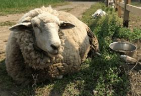 畑婚の動物