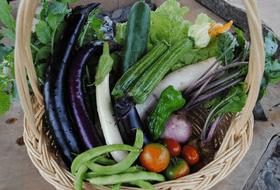 畑婚の野菜